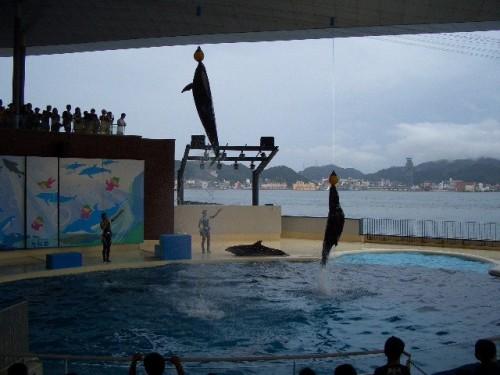 イルカとアシカの同時ジャンプ
