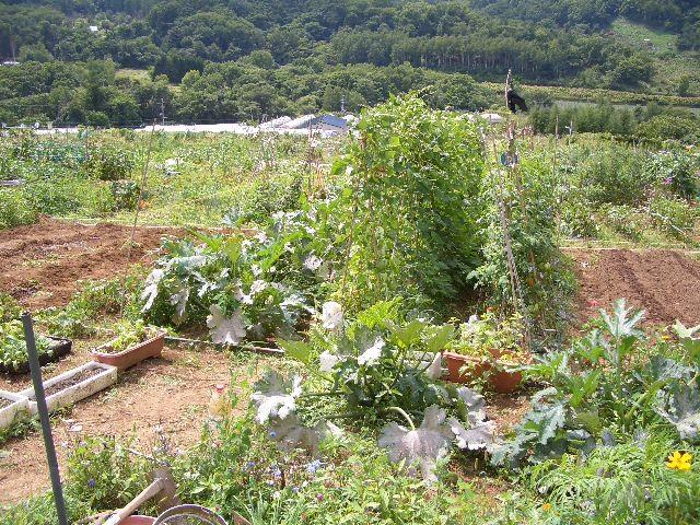 伯母自慢の菜園