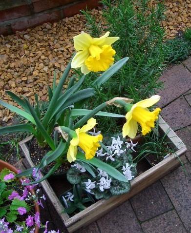 我が家の花たちその2