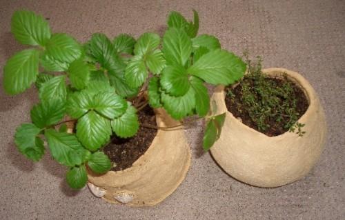 手作り鉢にハーブを植えてみました♪